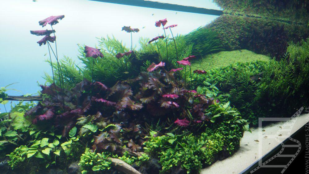 Akwarium by ADA - podwodna zieleń w stylu japońskim