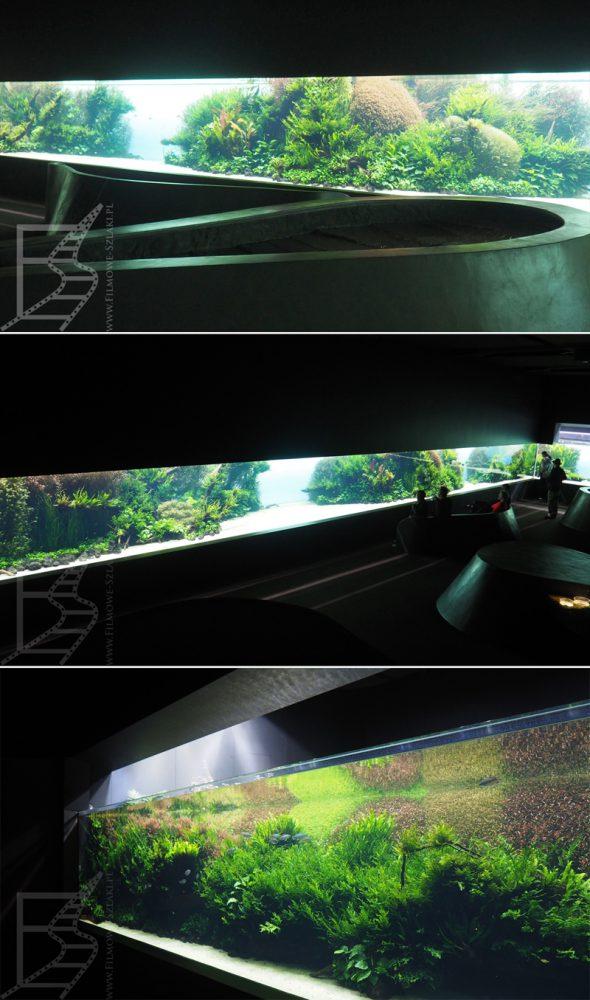 Akwarium - podwodna zieleń we wnętrzach